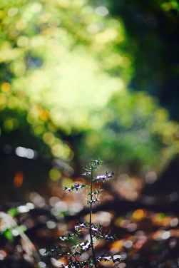 19_Autumn
