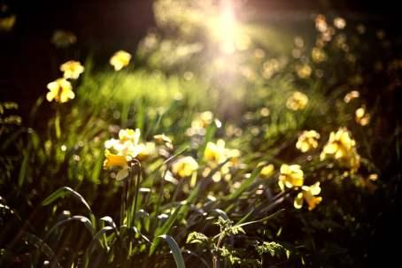 1_Spring