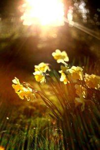 2_Spring