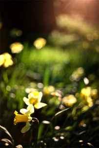 3_Spring
