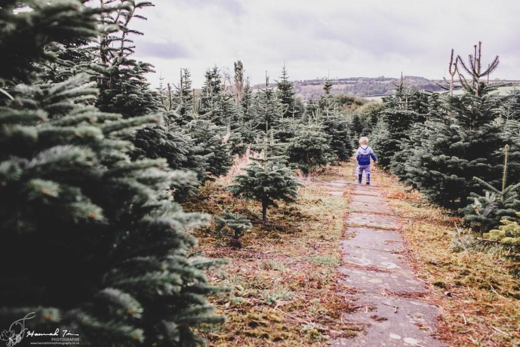 Christmas minis Liskeard