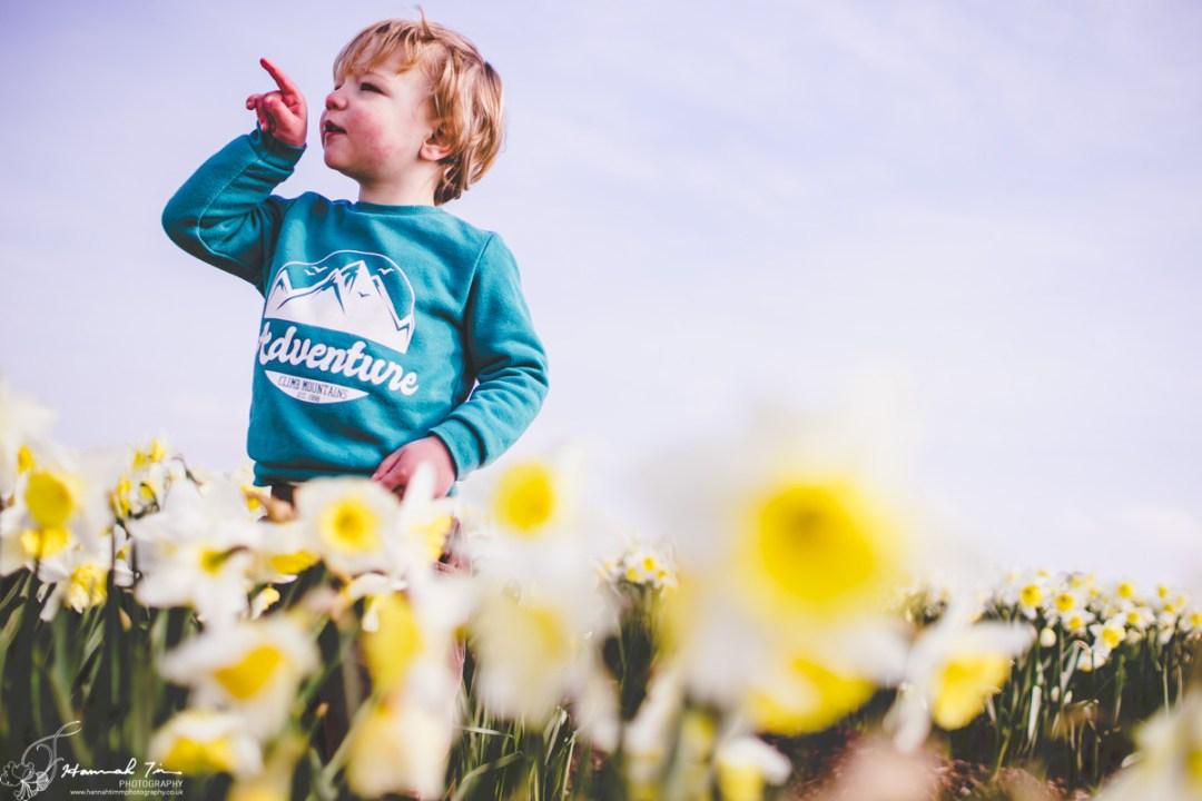 daffodil fields rame