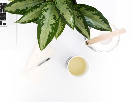 Chinese evergreen - air purifying plant