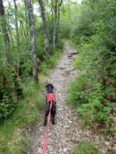 Wanderung im Jonte Tal, hannes-webseite.de - in Hannes kleiner Welt