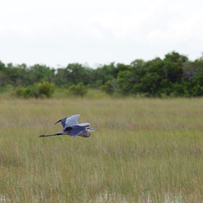Everglades, Shark Valley