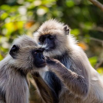 Zoo, Bhubaneswar, Odisha