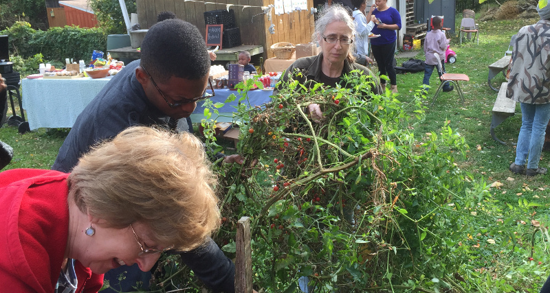 Photo: people clearing tomato plant from a garden bed