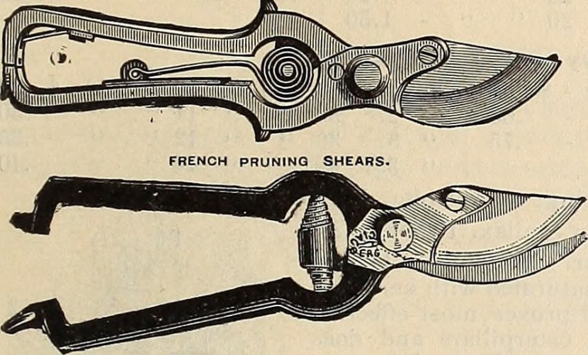 engraving: pruning shears