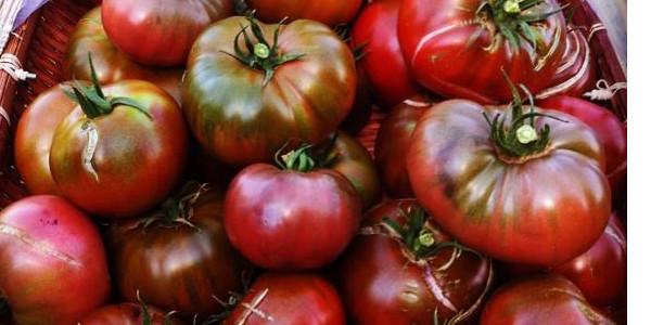 photo:basket of dark red tomatoes