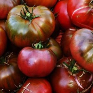 photo:basket of dark red tomatoes