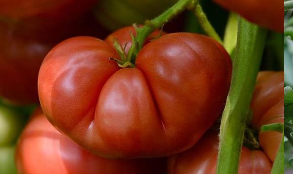 photo: large beefsteak tomato