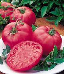 photo: large pinkish-red tomatoes