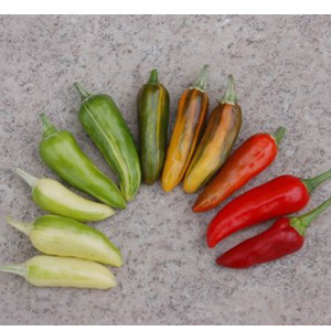 photo: variegated peppers in many colrs