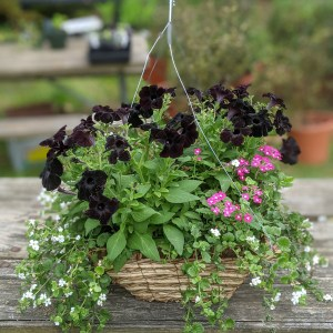photo:hanging basket of mixed flowers
