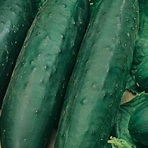 photo of cucumners