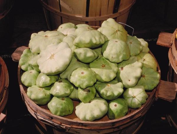 photo: bushel basket of pattypan squash