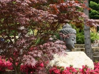 Der japanische Teil des Gartens wurde natürlich mit passenden Solitärs wie dem japanischem Zierahorn gestaltet
