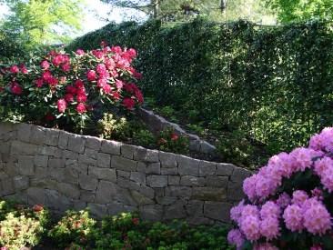 Die mobile Efeuhecke schirmt den Park vor neugierigen Blicken ab. Üppig blühende Rhododendren bringen Farbe in den Gartenpark.