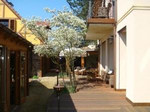 Schirmamelanchien bieten einen schönen, lichten Schatten. Zudem bieten sie zu jeder Jahreszeit einen neuen Anblick von der herrlichen Blüte bis zur schönen Herbstfärbung.