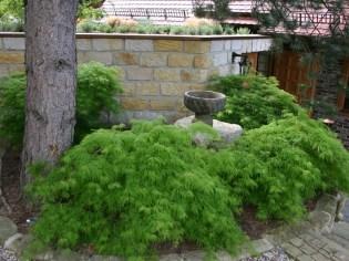 Das frische Grün der Ahorngruppe unter den kräftigen Kiefern ist im Frühjahr besonders anziehend.
