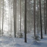 Winter Forest   Hansen-Spear Funeral Home - Quincy, Illinois
