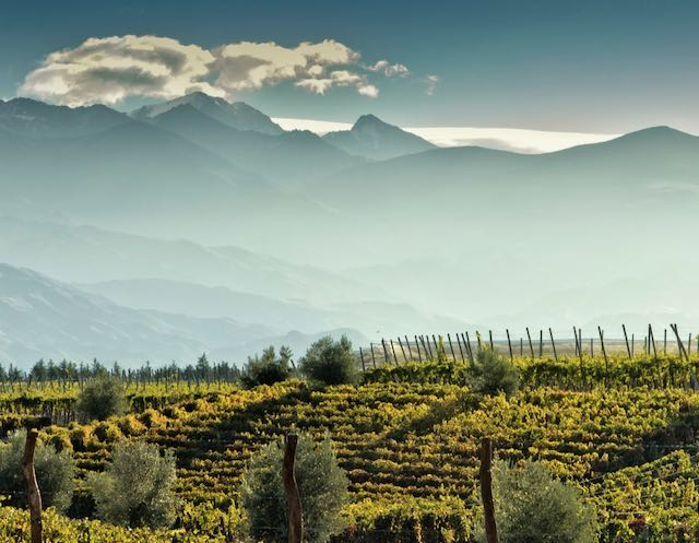 Argentina Vineyards medium