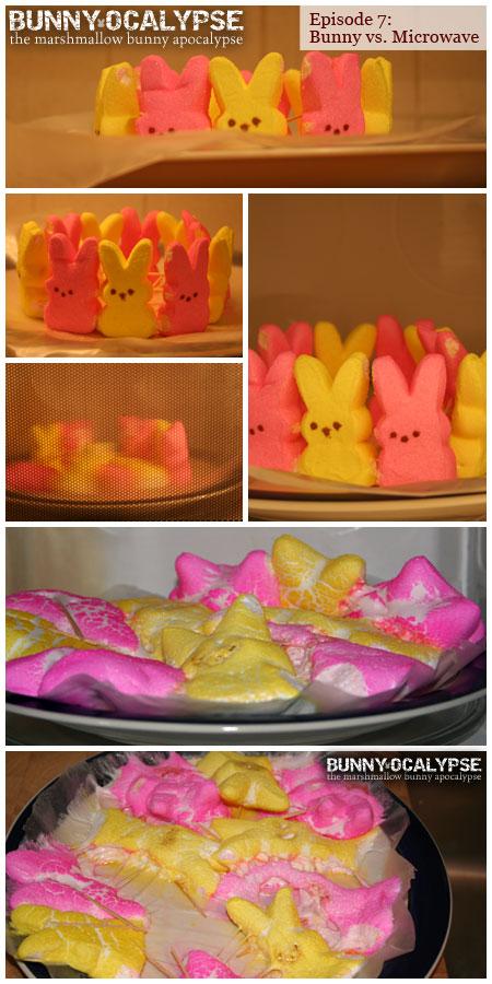 bunny vs microwave
