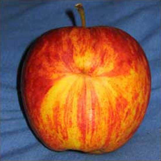 Blackhole Apple