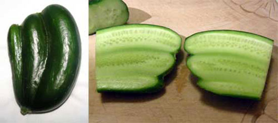 Cu-Cu-Cucumber!