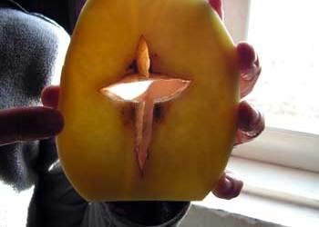 Cross Potato