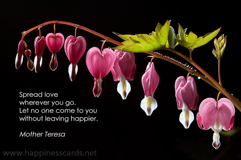 Dicentra with quote enlarged