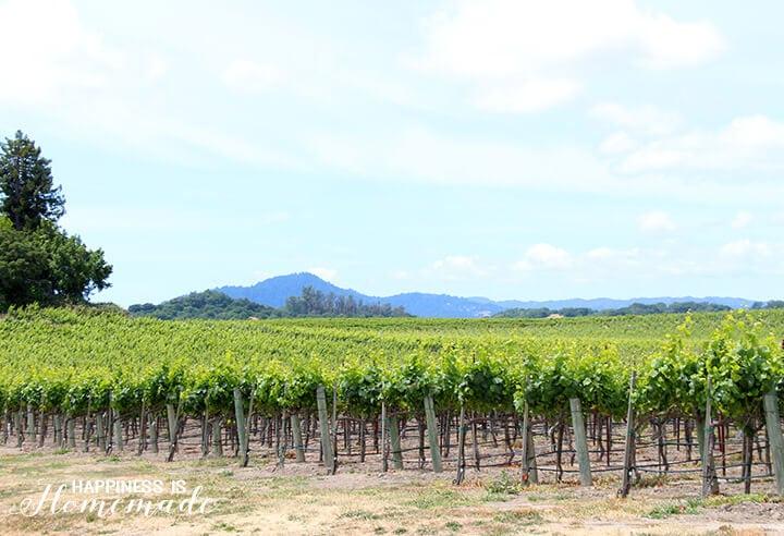 Sonoma-Cutrer Vineyard Tour
