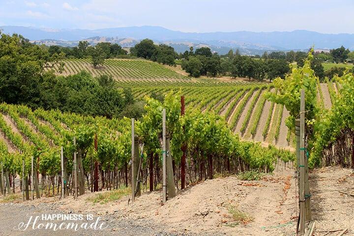 Sonoma-Cutrer Vineyards Tour