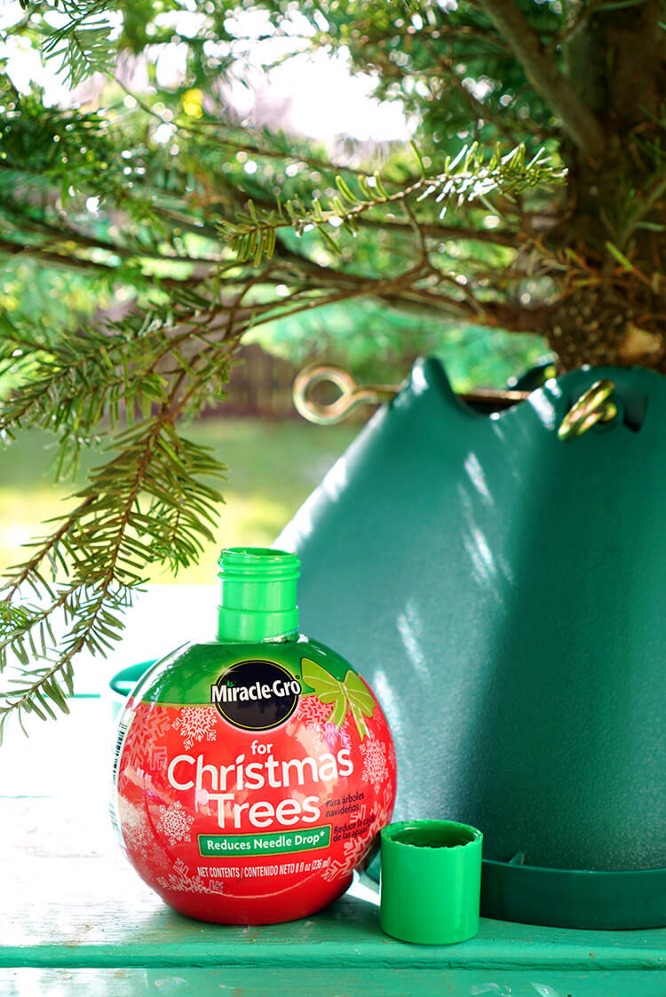 miracle-gro-for-christmas-trees-1