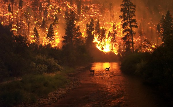 forest fires thanks to man made global climate crisis