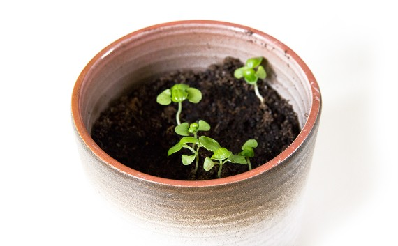 happy acorn plantjes urban jungle bloggers lijstje
