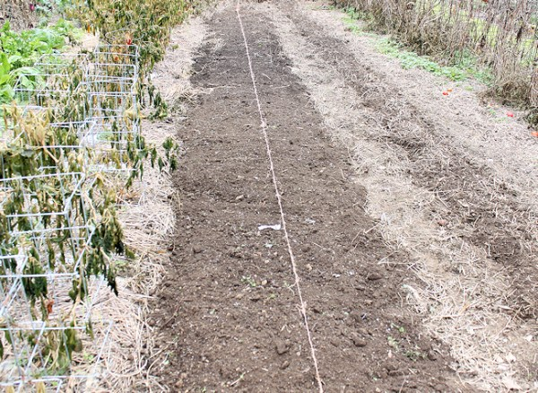 planting spot for garlic (click on any image to enlarge)