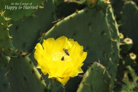 San Antonio Botanical Garden 8