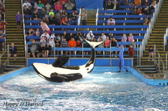 Shamu At Sea World 2