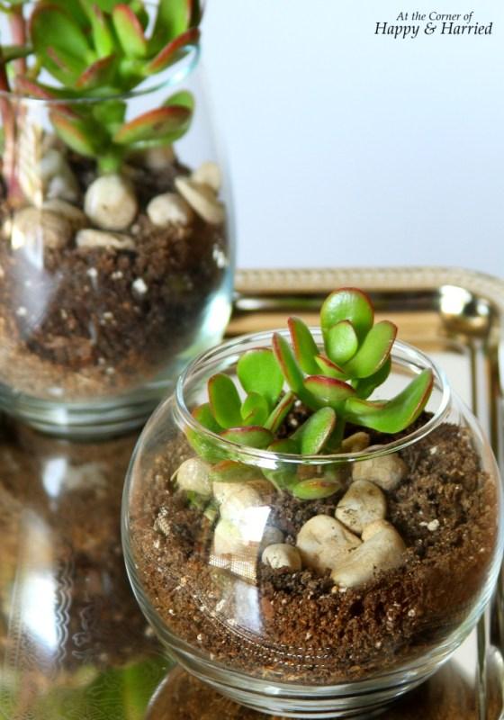 Glass Jar Terrarium