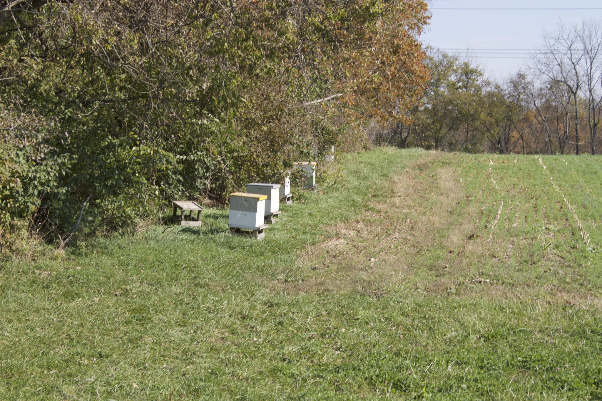 Bee Hives on the Farm