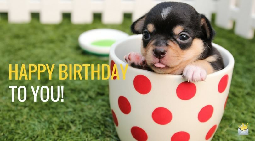 2 Words From Cute Animals Happy Bday Cute Birthday Wishes