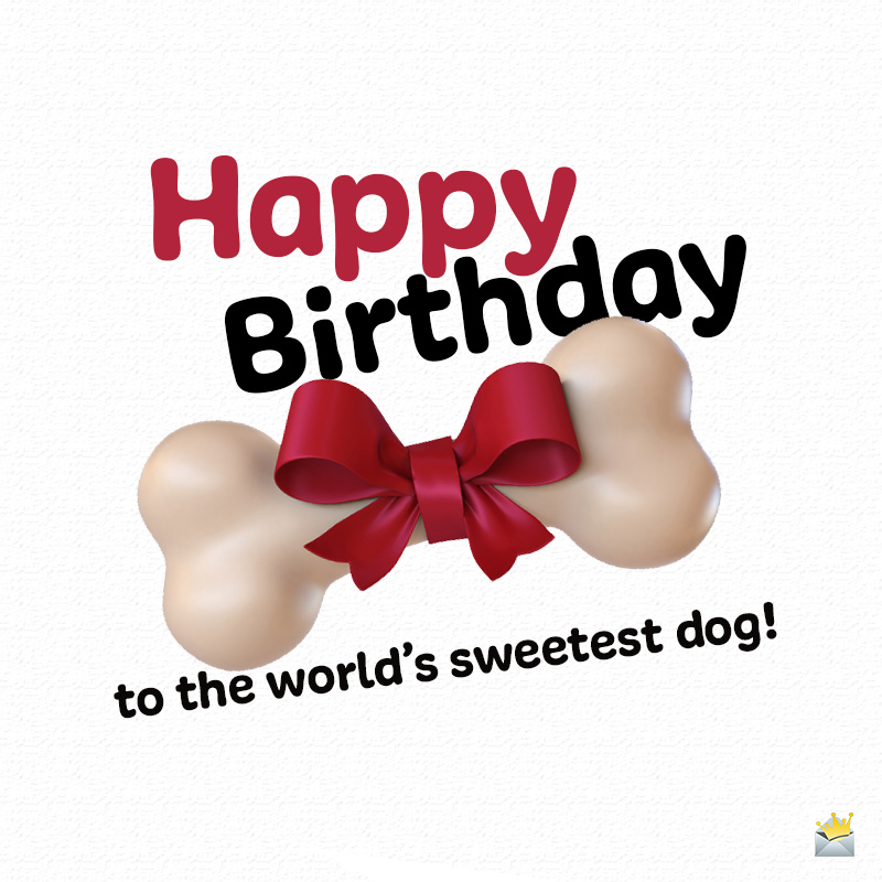 Happy Birthday To Woof Birthday Wishes For Dogs