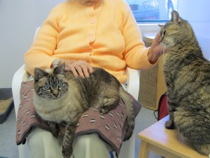 Smitty, Lucky & Grandmother @ Happy Cats Haven