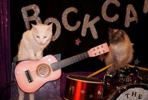 Pinky & Fiji the RockCats