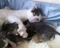 Abby & Kittens