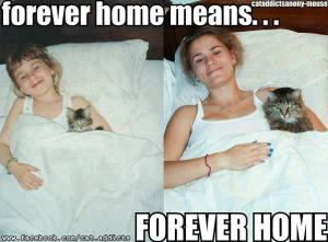 Forever Home means Forever Home
