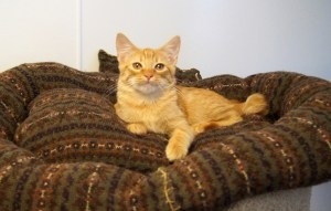 Mango in Huggy Bed @ Happy Cats