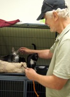 Kenny & kittens @ Happy Cats