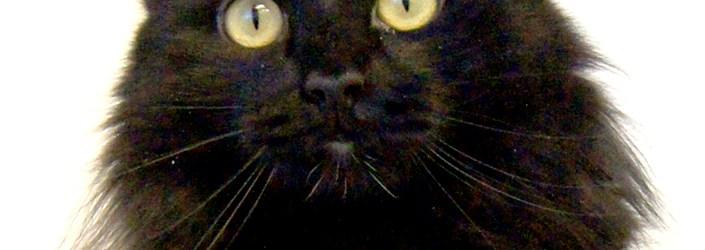 Merlot @ Happy Cats